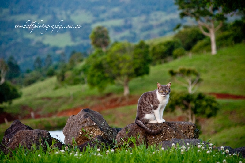 Wedding Photography in Maleny